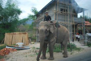 éléphant de Nong kiaw Laos