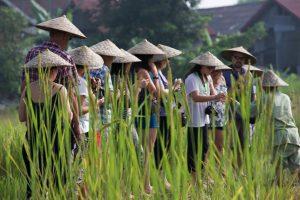 Laos découvrir culture du riz